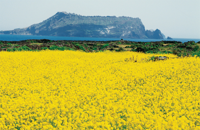 Jeju Island – KoreanProducts.com